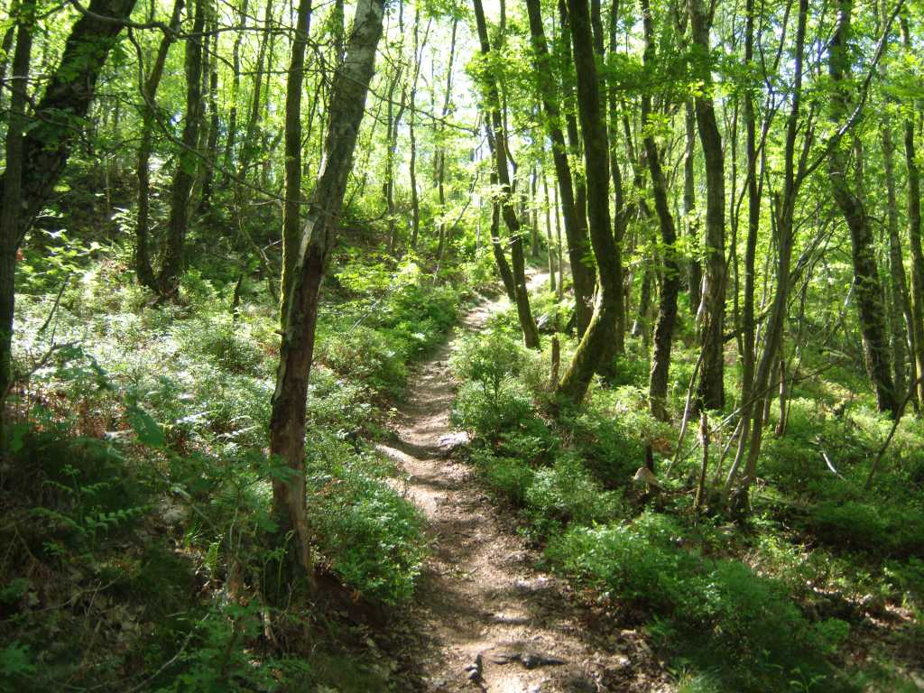 forets-des-ardennes