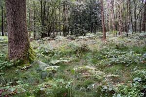 forêt 03