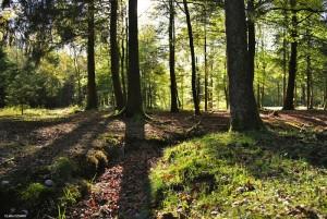 forêt 04