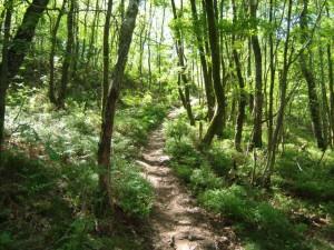 forêt 05